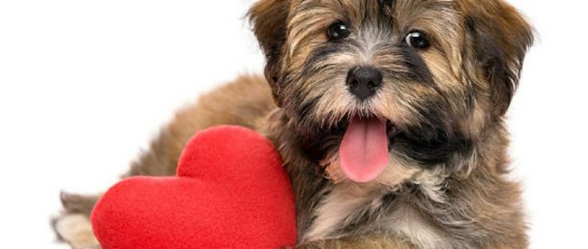 Pets for heart healthy