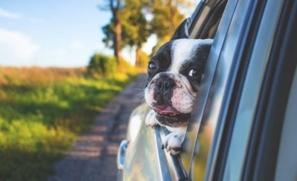 moving with pets across country