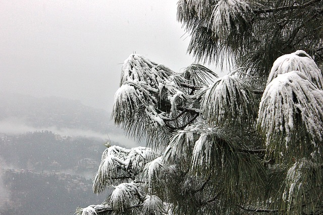 snow at Shimla