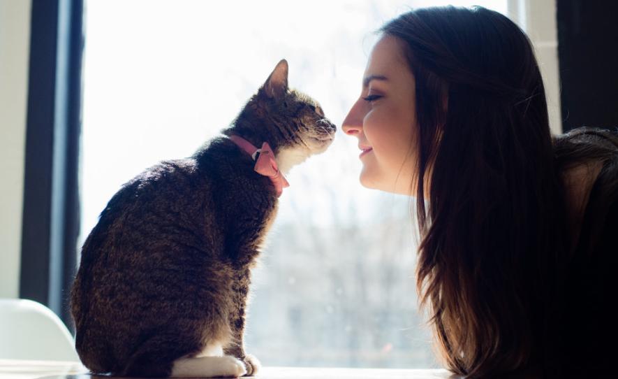 common symptoms of a sick cat